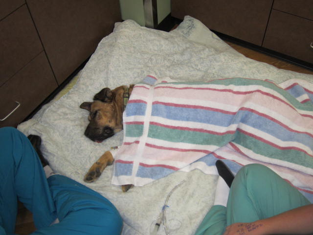 After neutering dog recovery